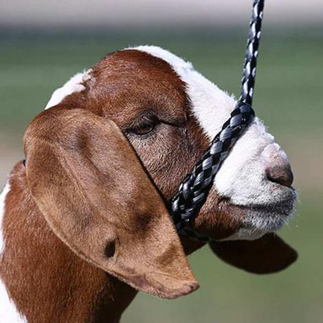 Sullivan's Soft Braid Sheep and Goat Halter - Chrome
