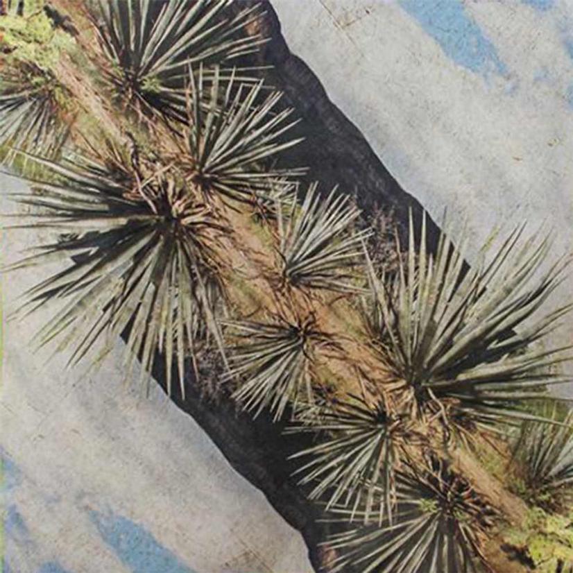 Yucca Peared Wild Rag 26x26