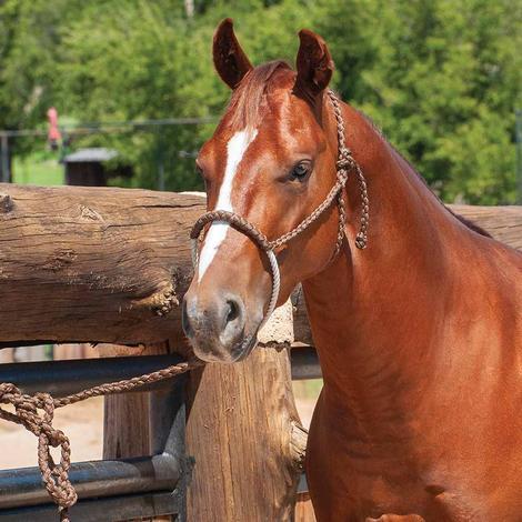 Classic Equine Halter Rope