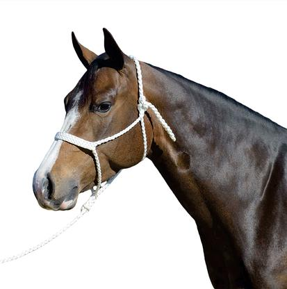 Martin Saddlery Mule Tape Halter