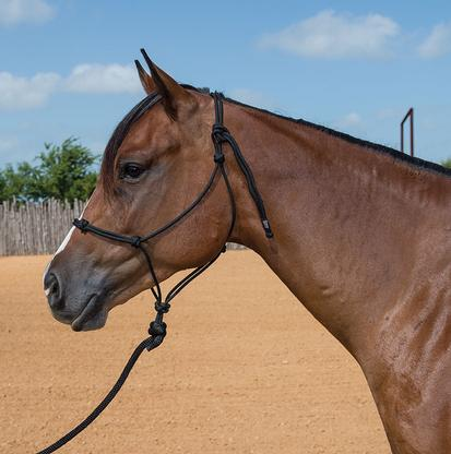 STT Black Knotted Training Halter 9 Foot Lead Yearling