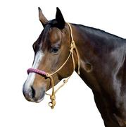 Mustang Waxed Rope Halter W/Braided Color Noseband